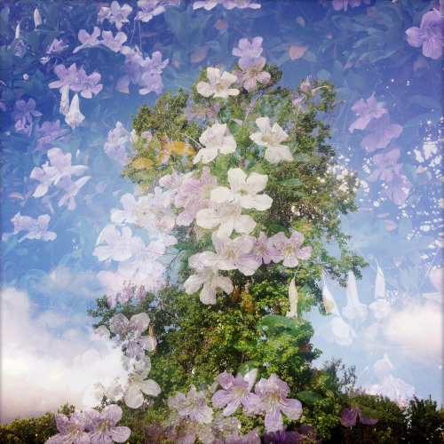 Tree with Lavender Flowers