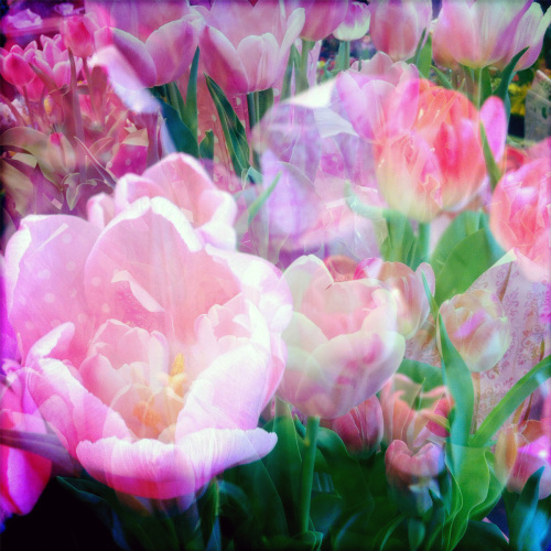 Tulips, Double Exposure, #2