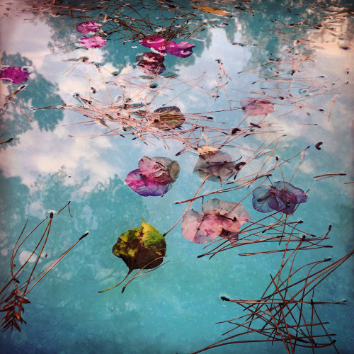 Petals on the Pool, with Clouds and Pine Needles