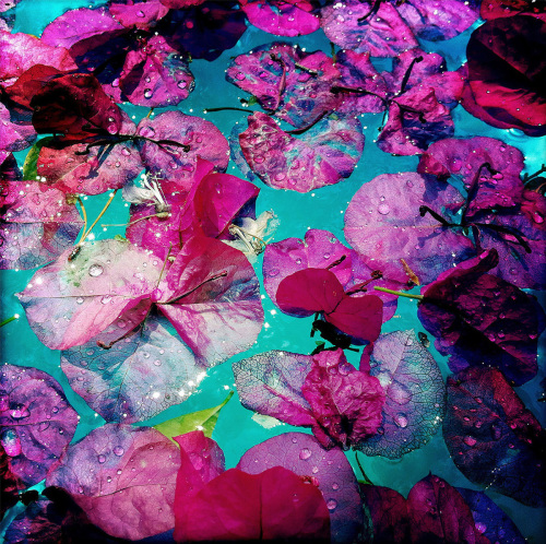 Petals on the Pool, with Water Droplets, Study 1