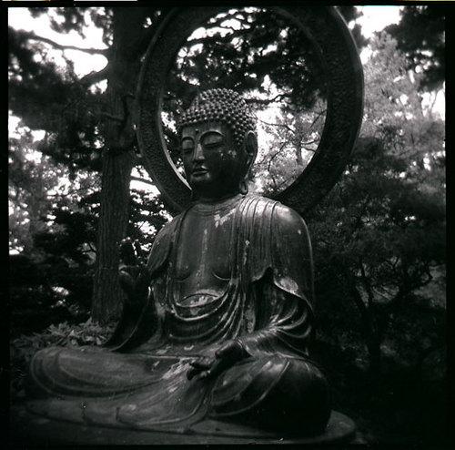 Buddha- Golden Gate Park