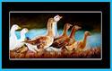 Painting--Oil-AnimalsBATHTIME DUCKS by M BALDWIN