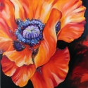 HEART of a red POPPY (thumbnail)