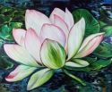 Painting--Oil-FloralLOTUS