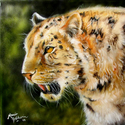 LEOPARD by M BALDWIN ~ ORIGINAL OIL 18 X 18 (thumbnail)