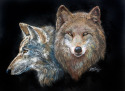 Painting--Pastels-WildlifeTWO WOLVES in PASTEL