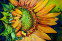 Painting--Oil-FloralNEW DAY SUNFLOWER