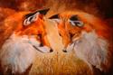 FOX AND A LADYBUG (thumbnail)