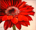 Painting--Oil-FloralRED DAISY IV