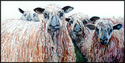 Painting--Oil-AnimalsWESLEYDALE SHEEP