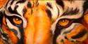 Painting--Oil-WildlifeWILD EYES