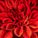 THE RED DAHLIA (thumbnail)