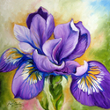 PURPLE IRIS WILDFLOWER (thumbnail)
