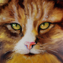 AMBER EYES SWEET KITTY (thumbnail)