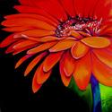 RED GERBERA JANUARY (thumbnail)