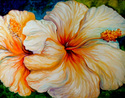 Painting--Oil-FloralRAINBOW HIBISCUS