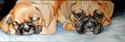 Painting--Oil-AnimalsSLEEPY & NOT ME !