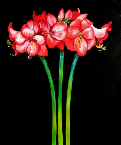 AMARYLLIS TRIO by M BALDWIN (large view)