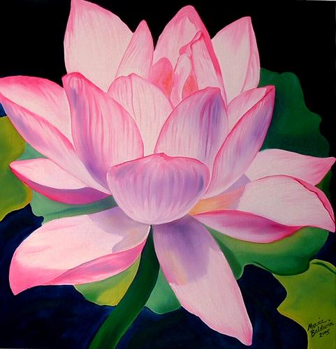 Pink Waterlily (large view)
