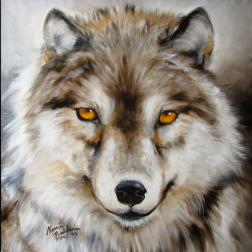 Painting--Oil-AnimalsWOLF AMBER EYES