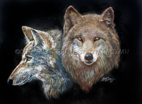 TWO WOLVES in PASTEL