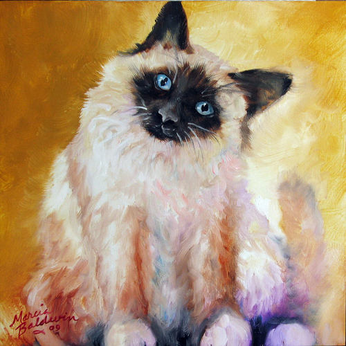 SWEET KITTY SIAMESE by M BALDWIN 12x12 OIL ORIGINAL (large view)
