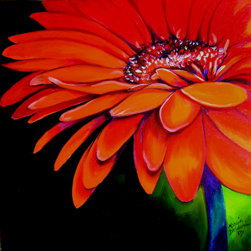 RED GERBERA JANUARY (large view)