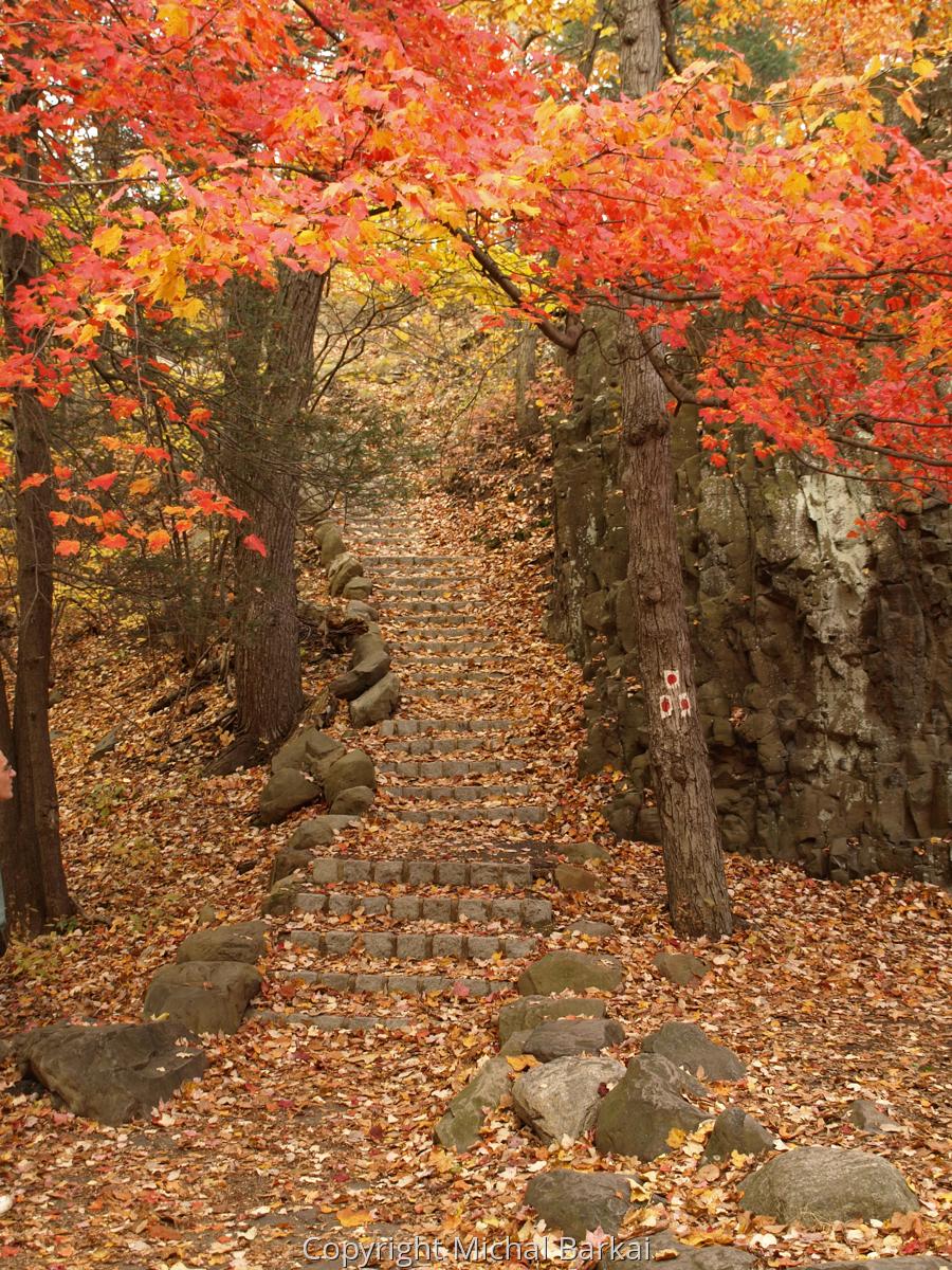 Autumn Path (large view)