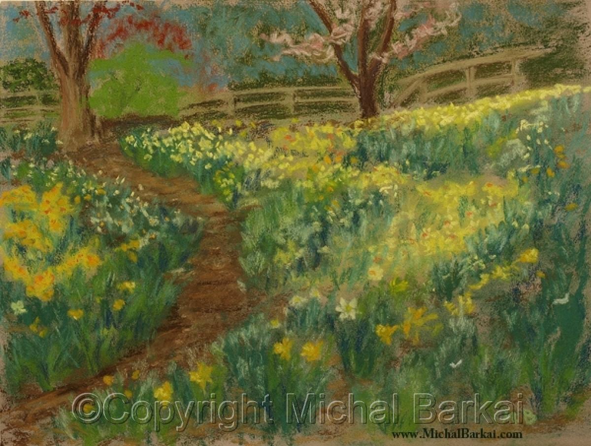 Daffodil Path (large view)