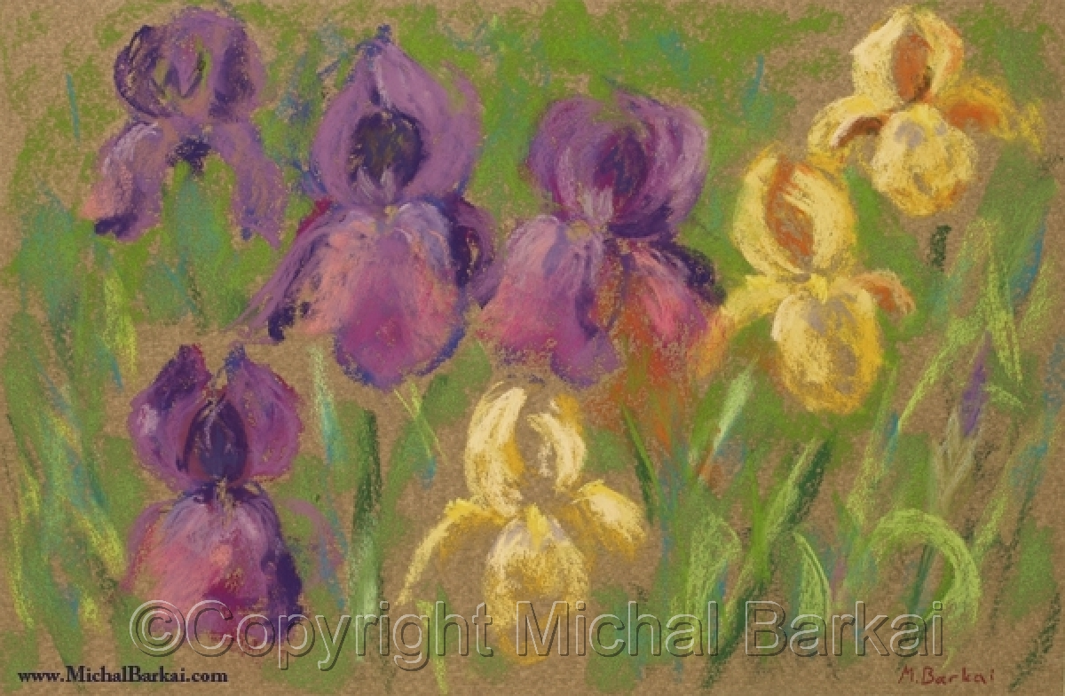 Purple and Yellow Irises (large view)