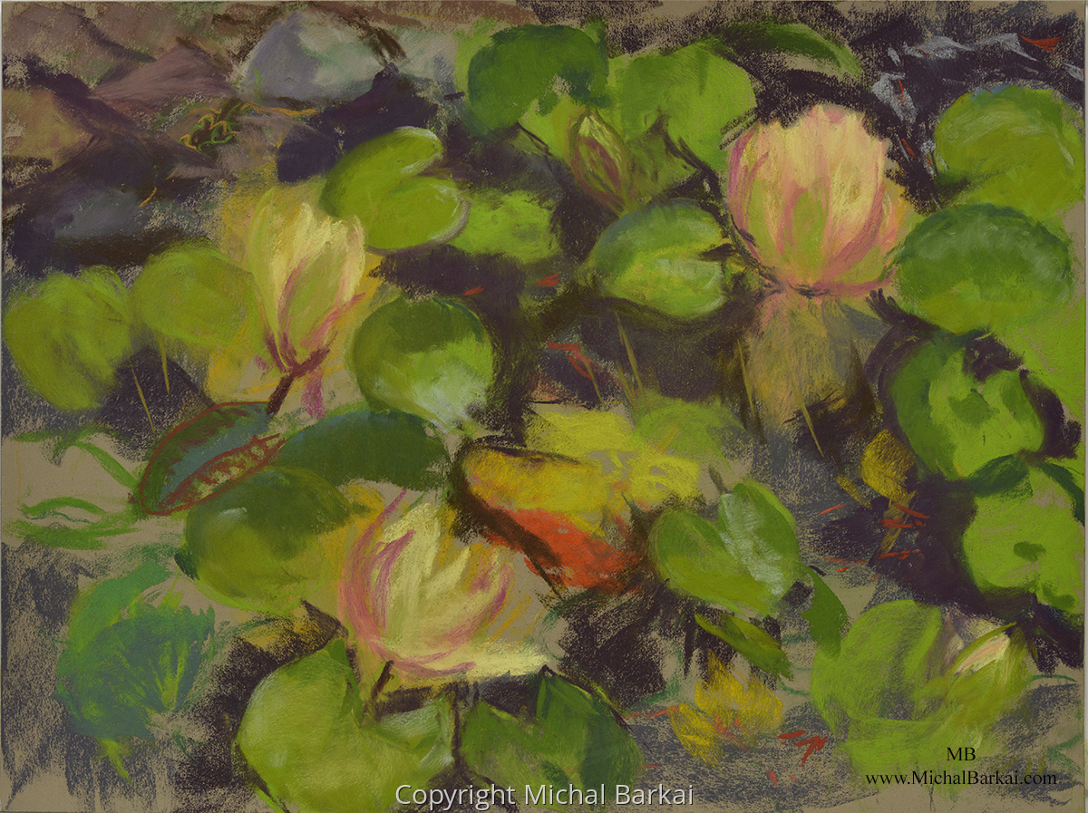 """Waterlilies closing"" (large view)"