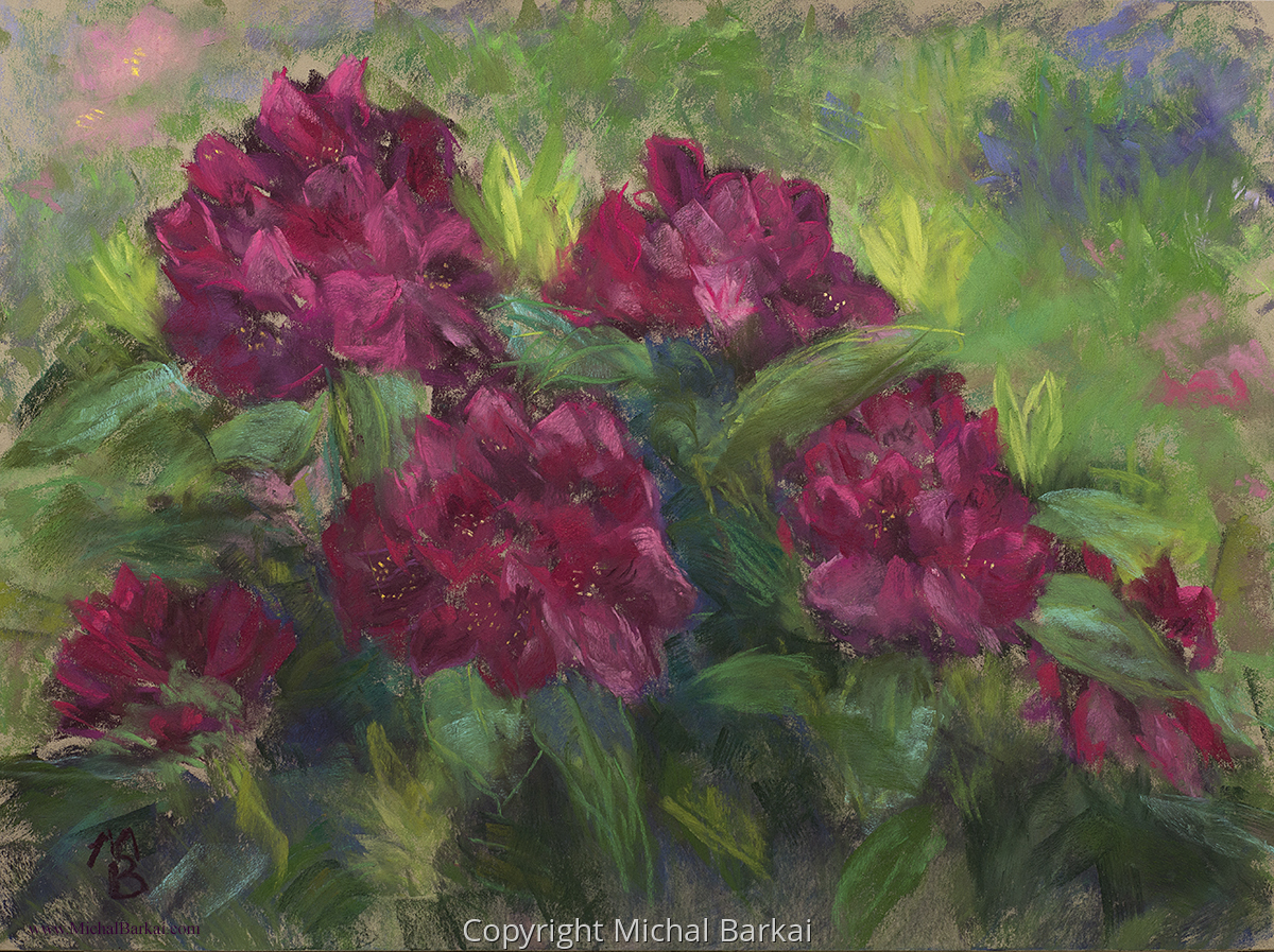 Deep Red Rhododendrons (large view)
