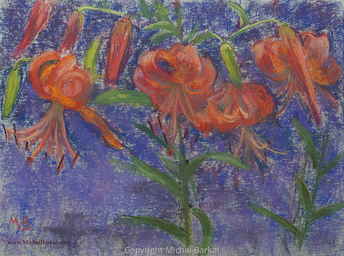 Tiger Lilies, Side Garden (large view)