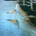 Strolling Gull (thumbnail)