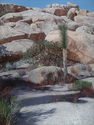 Manzanita and Boulders (thumbnail)