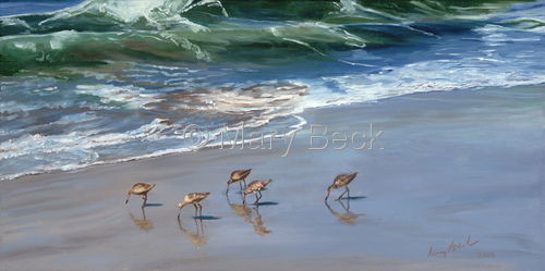 Godwits Feasting by Mary Beck