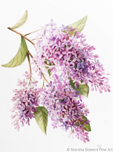 Lilacs by Marsha Bowers Fine Art Gallery