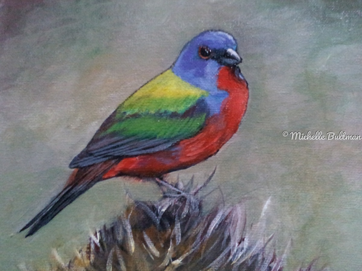 Painted Bunting (large view)