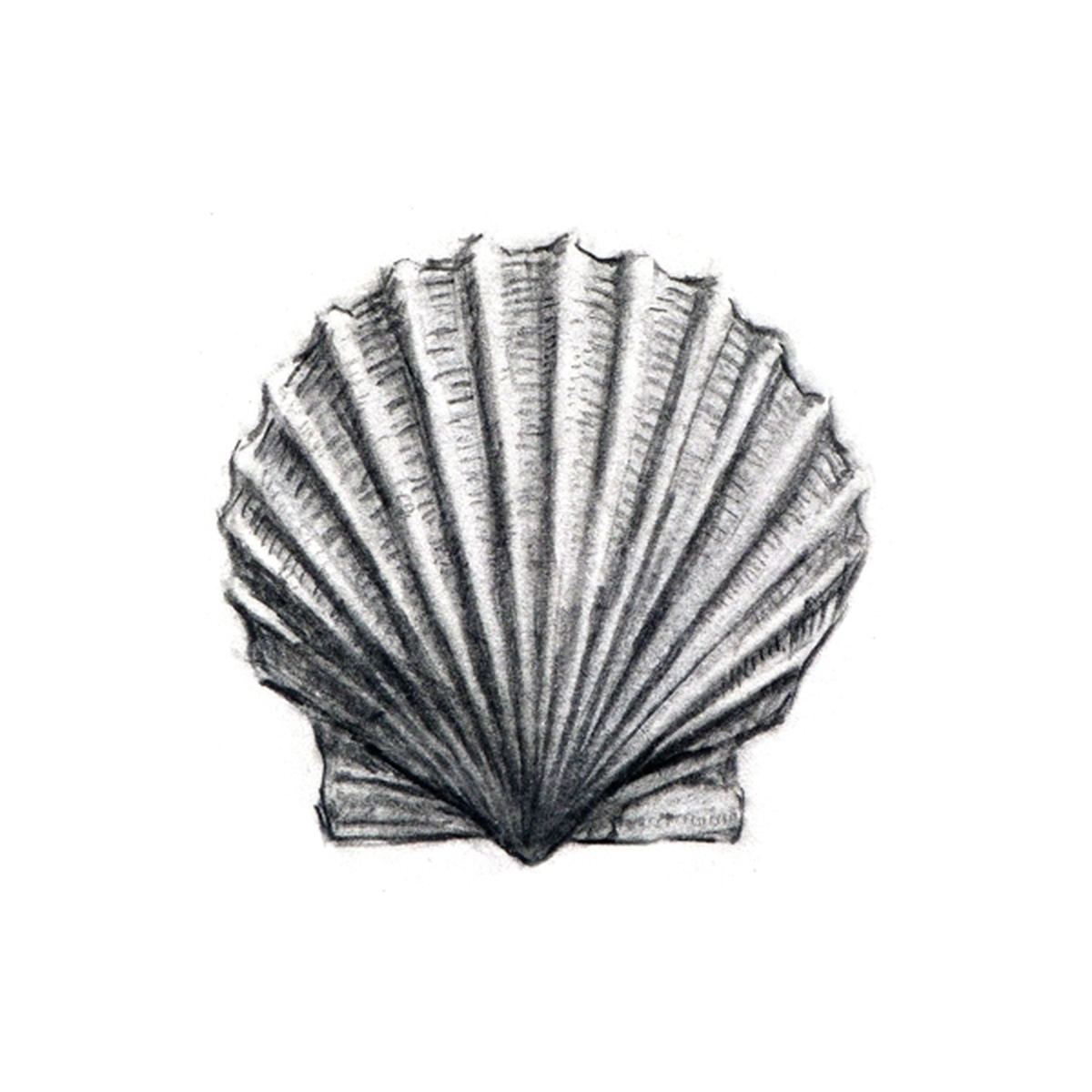 Scallop Shell (large view)