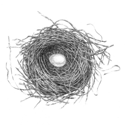 Bird in nest drawing