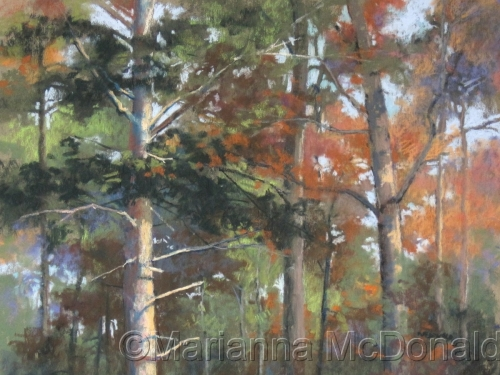 Pines and Maples