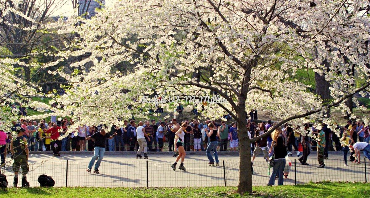 Central Park Skating Ring (large view)
