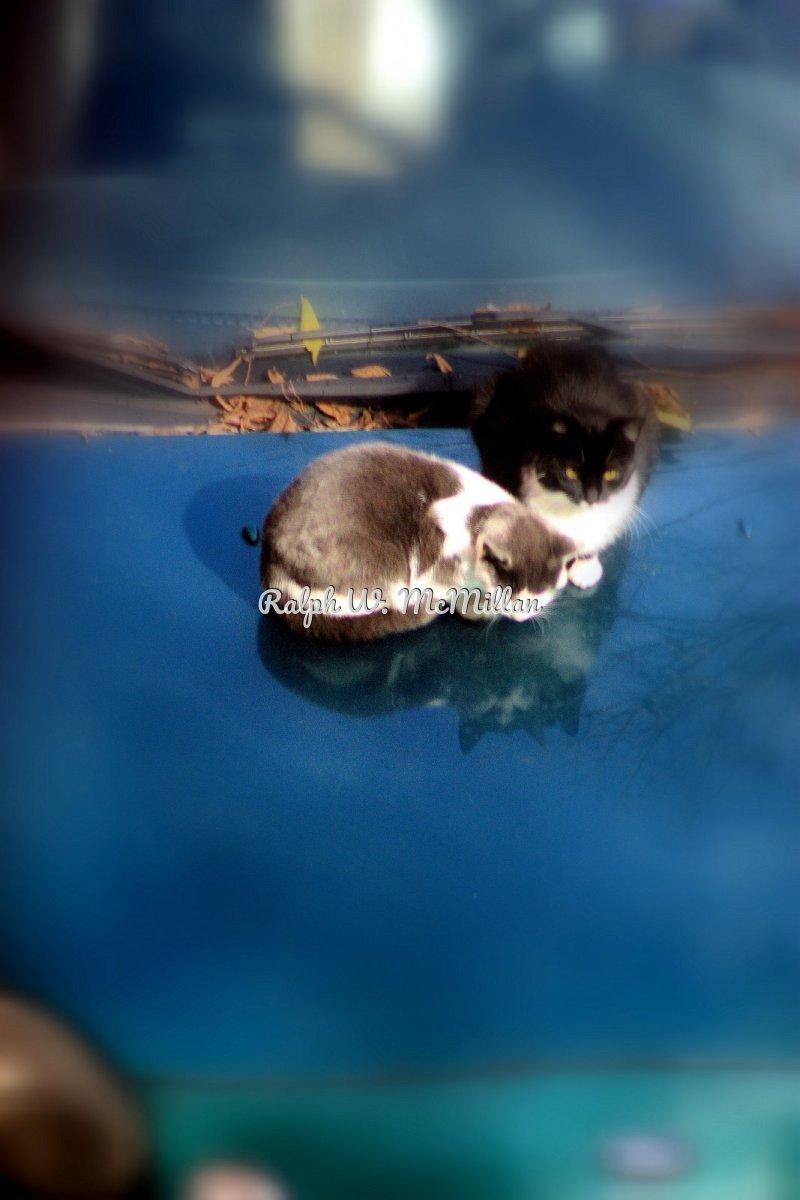 Two Katty Kates (large view)