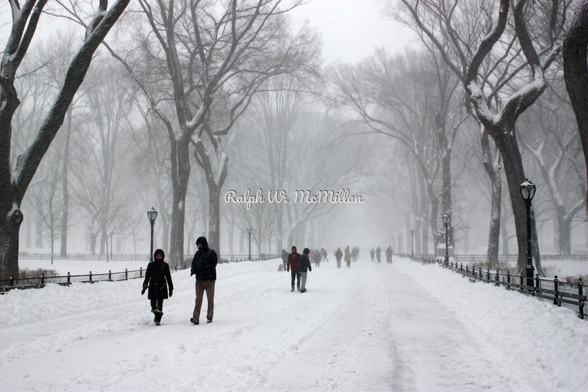 Blizzard of 2016 in, Central Park N.Y.C. (large view)