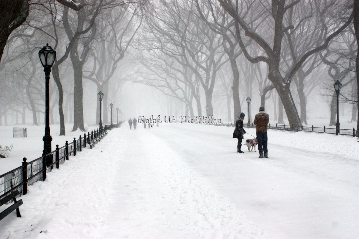 Blizzard of 2016, In Central Park N.Y.C. (large view)