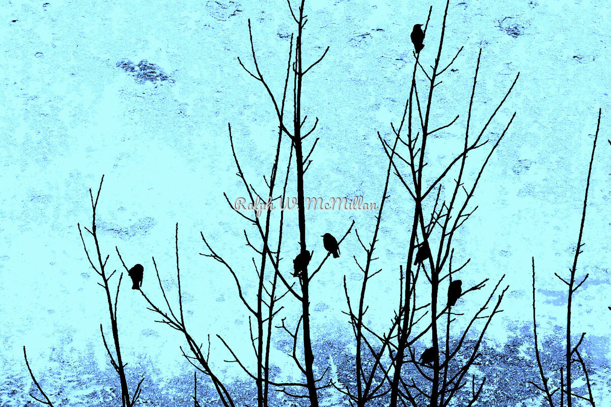 Birds In A Tree # 1 (large view)
