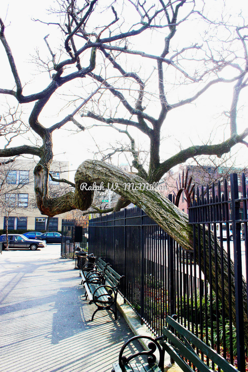 Tree coming out of a gate (large view)