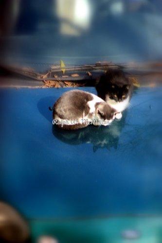Two Katty Kates
