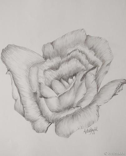 rose#3