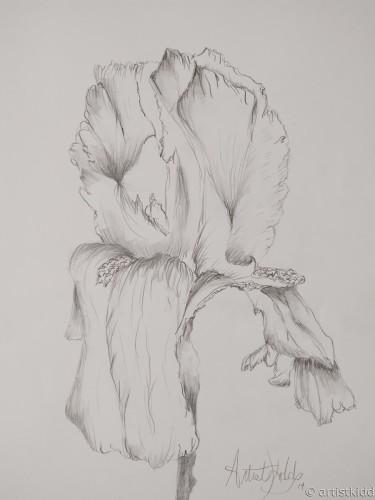 mom's iris
